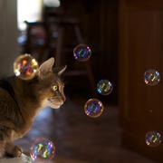 19th Apr 2015 - Bubbles