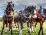 19th Apr 2015 - The Big Horses