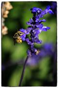 1st Apr 2015 - Busy Bee