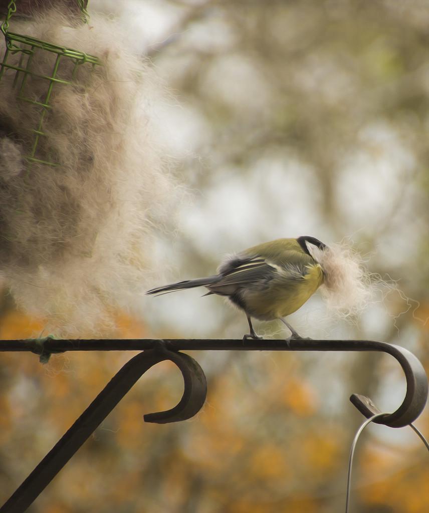 Busy Bird...... by shepherdmanswife