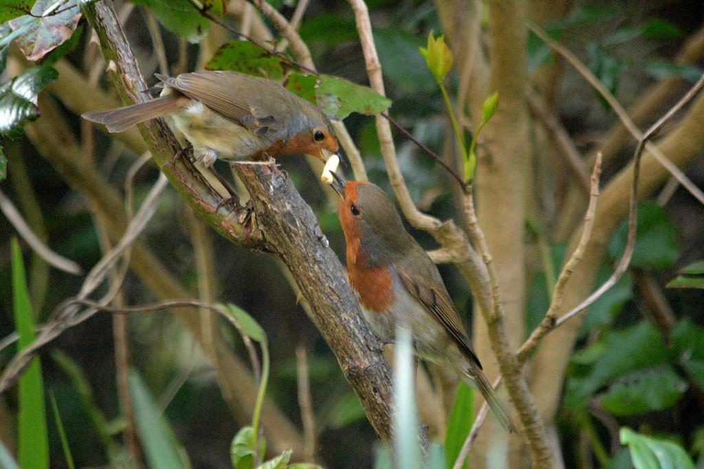 Love birds by richardcreese