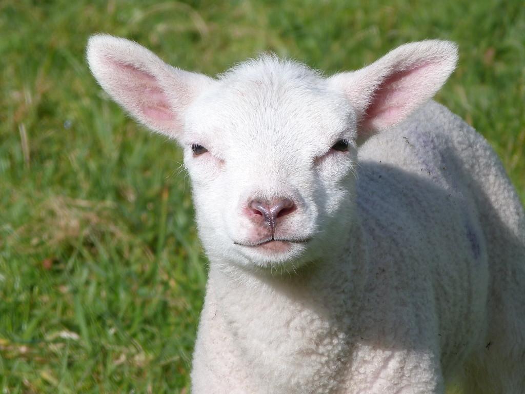 a little bit of cuteness  by shirleybankfarm