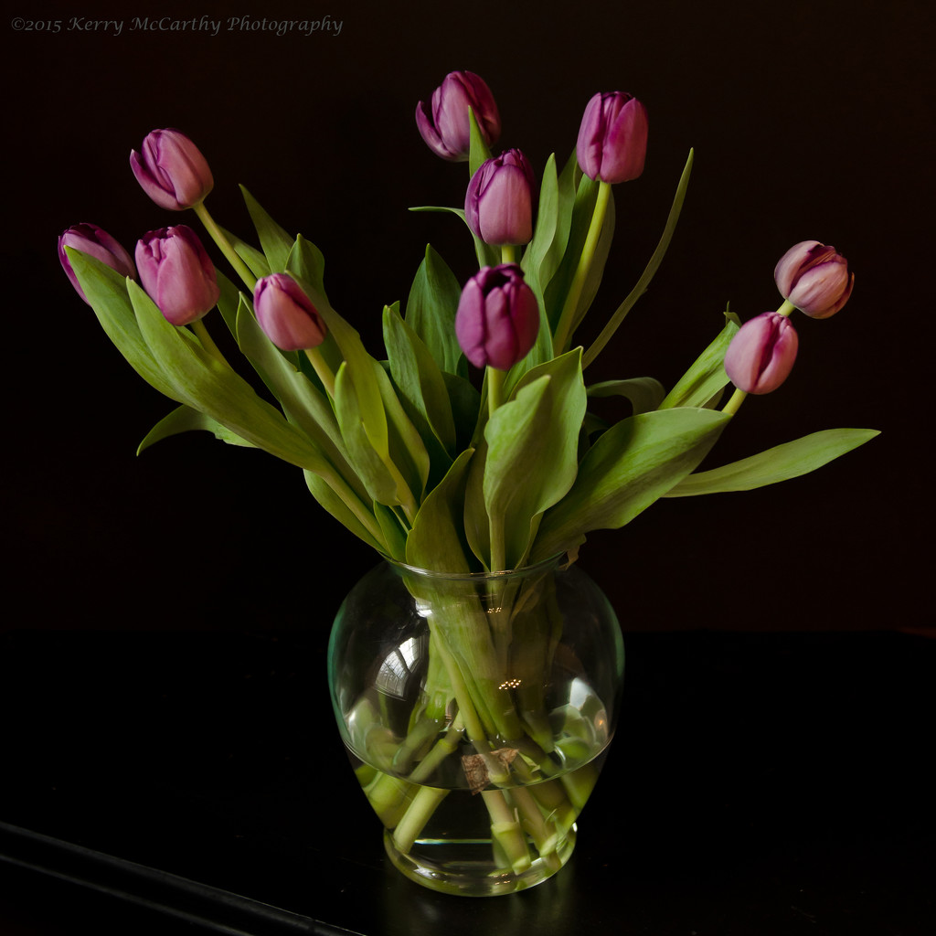 Tulips from friends by mccarth1