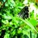 Leptir se sunča by vesna0210