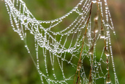 21st Apr 2015 - Dewdrops Mean Wet Feet - and Spider Webs