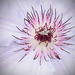 Alien Flower by rickster549