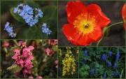 21st Apr 2015 - Spring Blossoms