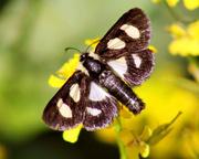 22nd Apr 2015 - Moth