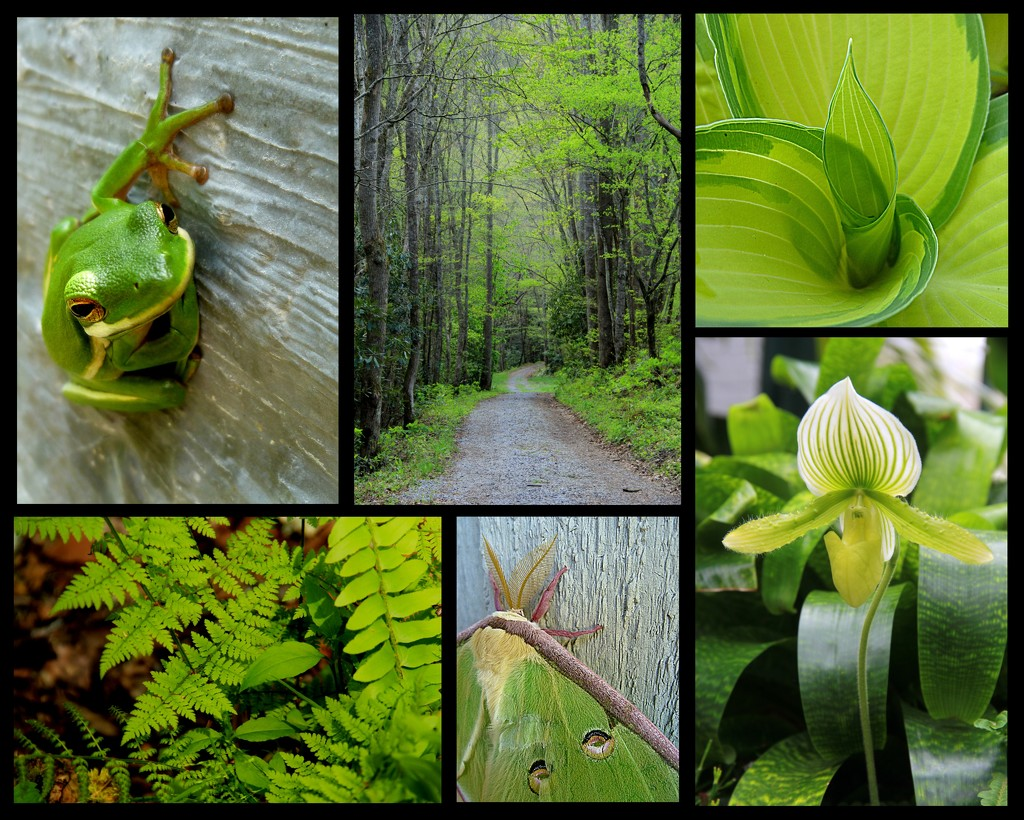 Green Collage by calm