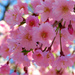 Pink! by olivetreeann
