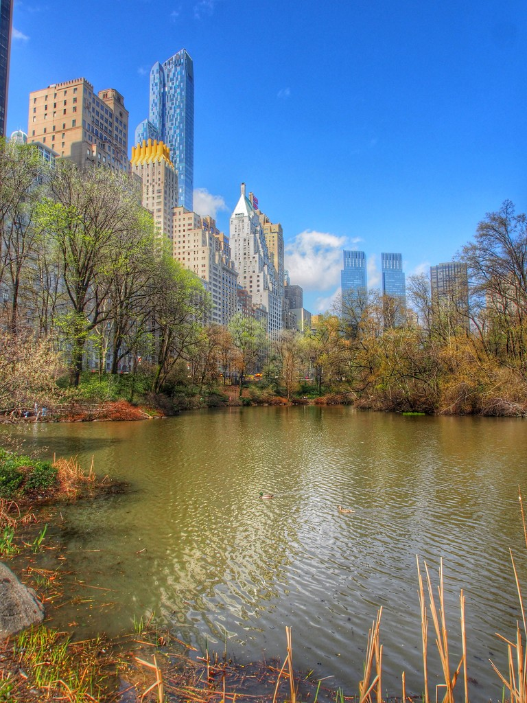 Central Park by redy4et