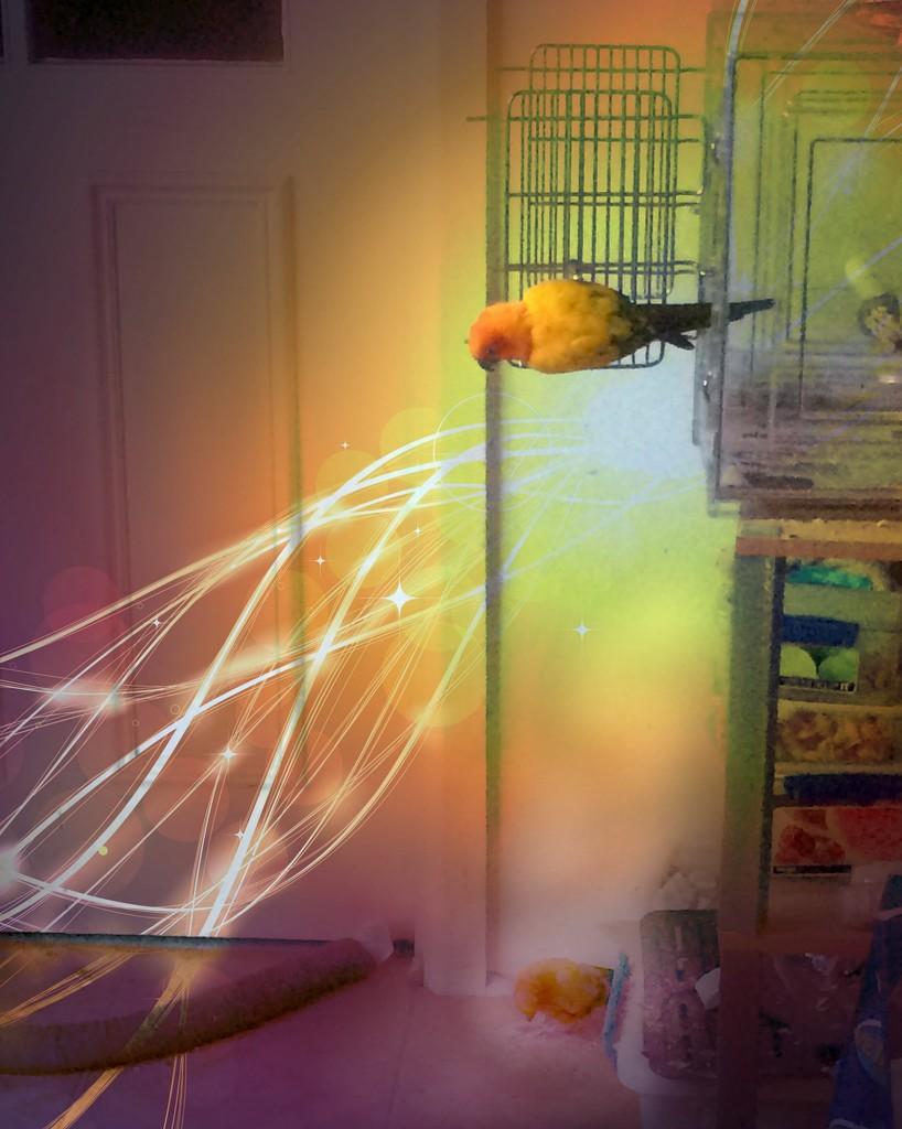 Magic Parrot Portal by alia_801