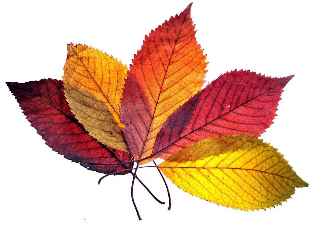 Autumn hues by blightygal