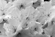 23rd Apr 2015 - White On White