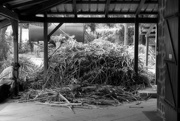 23rd Apr 2015 - Heaps of sugar cane waiting to be processed into rum