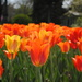 This Spring is on Fire by alophoto