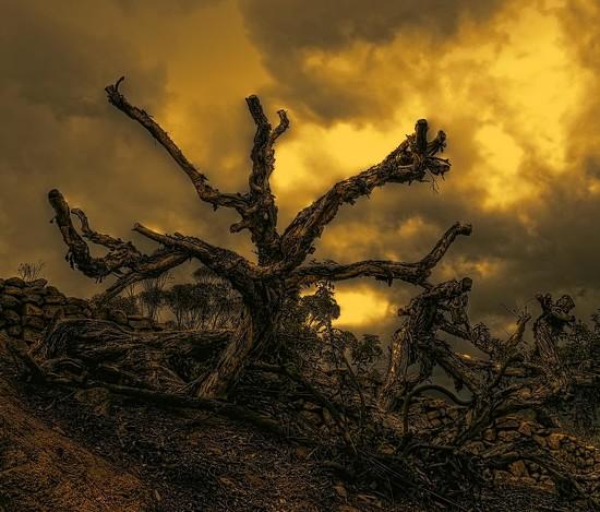 Desolation by joysfocus