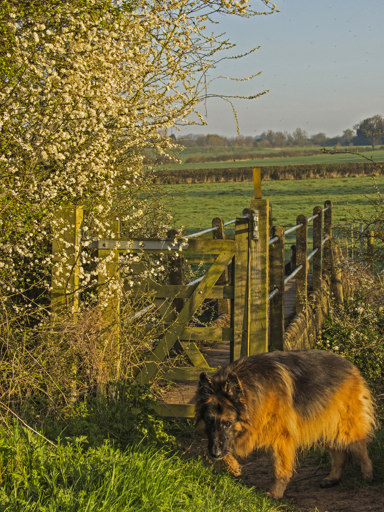 Heading home by shepherdman