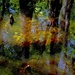 Four Holes Swamp, Dorchester County, SC by congaree