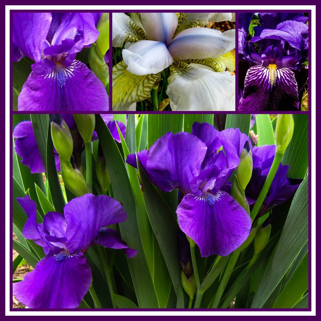 Springtime and Iris - Like Bread and Butter by milaniet