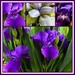 Springtime and Iris - Like Bread and Butter