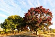 24th Apr 2015 - Roadside autumn