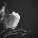 Pink Rose by richardcreese