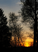 25th Apr 2015 - Sunset with silhouetted trees