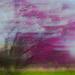 icm tree by aecasey