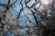25th Apr 2015 - Spring is coming [2]