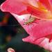 Jiminy by Weezilou