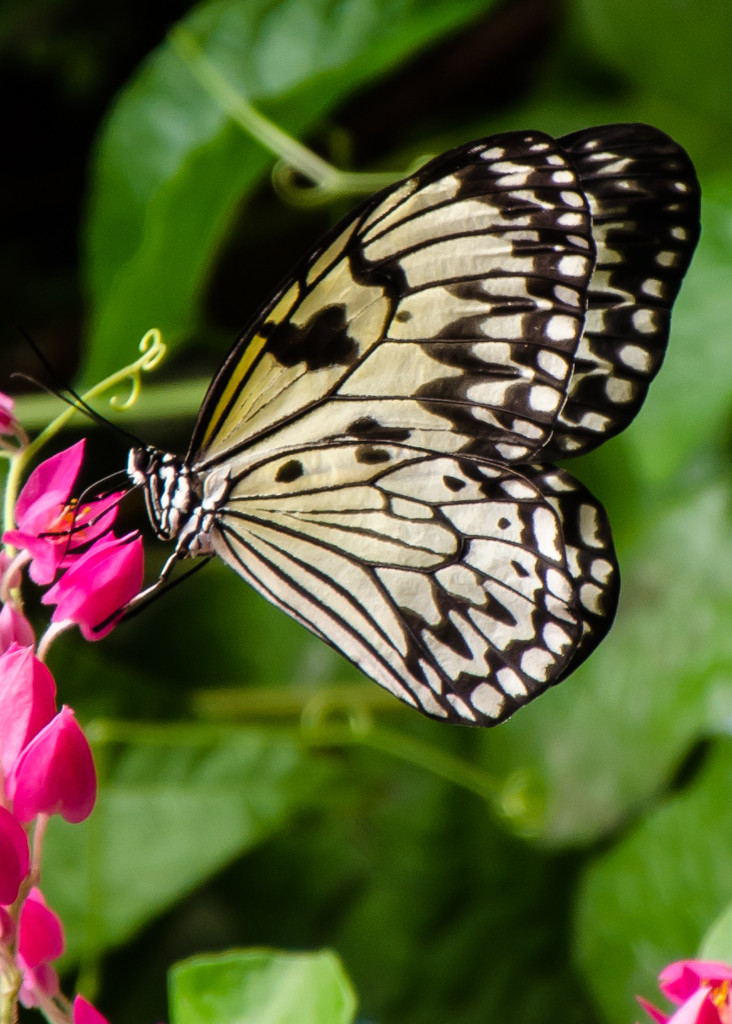 Butterfly on Pink flower by salza