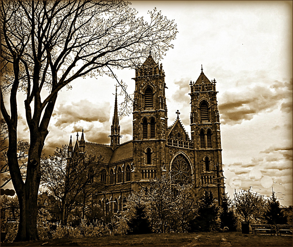 Cathedral Basilica of the Sacred Heart by olivetreeann