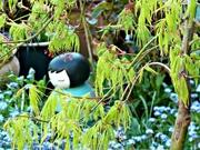 24th Apr 2015 - In My  Garden.