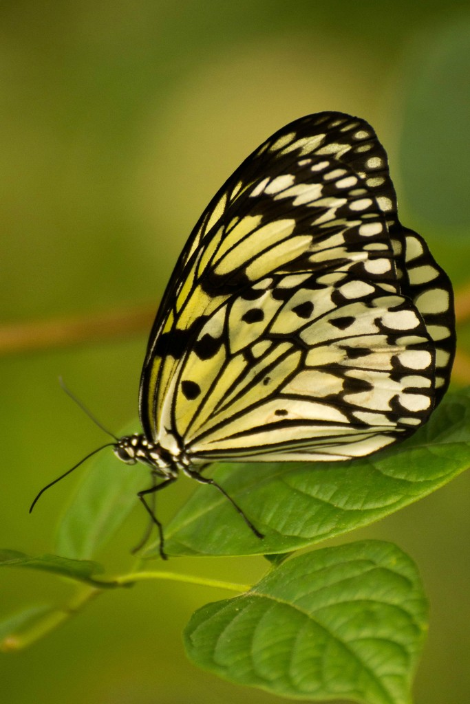 2015 04 26 Butterfly World 1 by kwiksilver