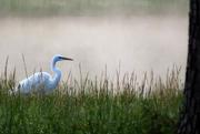 27th Apr 2015 - Stalking in the Fog