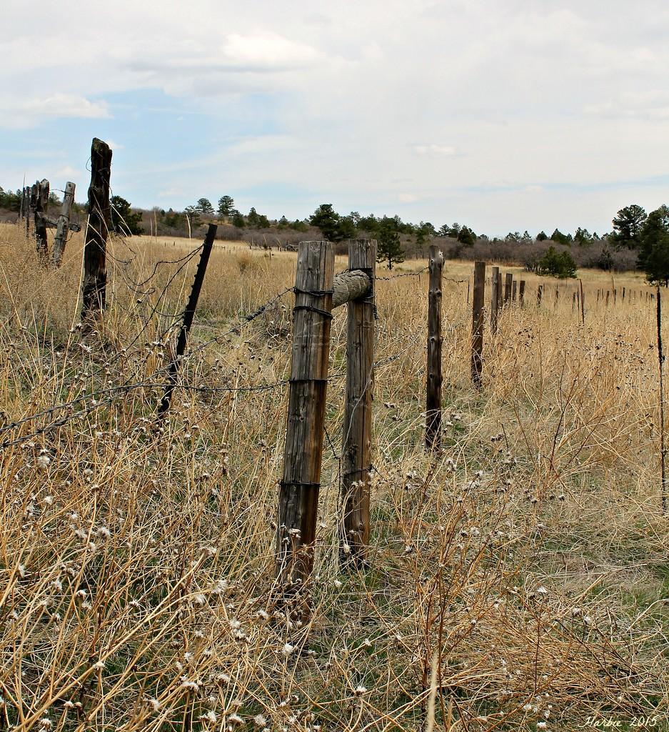 Fences by harbie