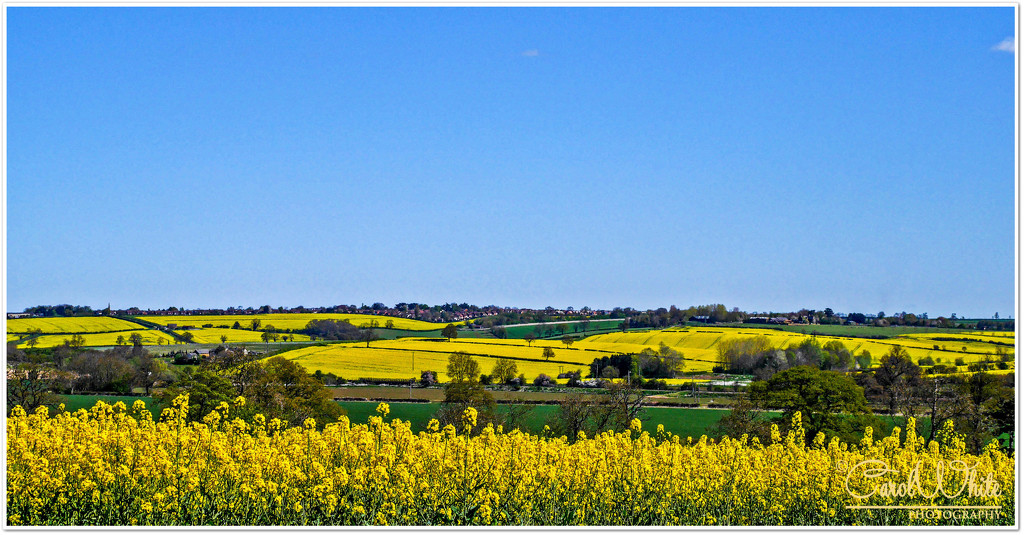 Fields Of Gold And Sky Of Blue by carolmw