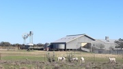 """28th Apr 2015 - """"The Shearing Shed""""..."""