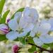 The Wonders Of Spring