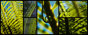 29th Apr 2015 - The Undeniable Beauty of the Cycad