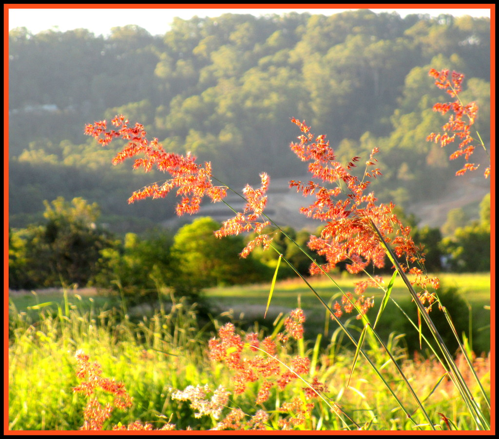 Grasses in the afternoon sun by 777margo