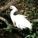 A Farewell to the Egret