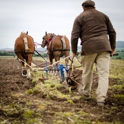 29th Apr 2015 - Ploughing