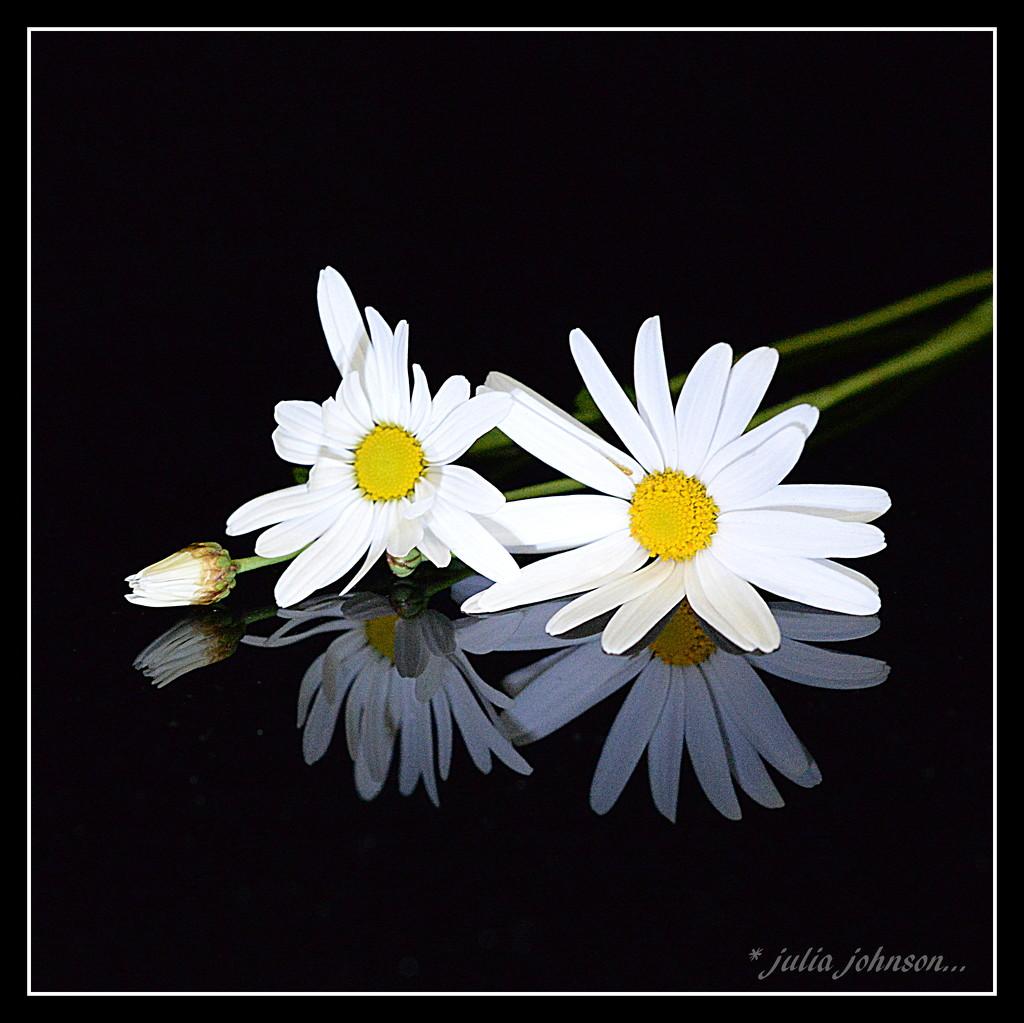 Daisy a Day Dear... by julzmaioro