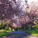 blossom avenue by pinkpaintpot