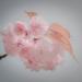 Blossom by stiggle