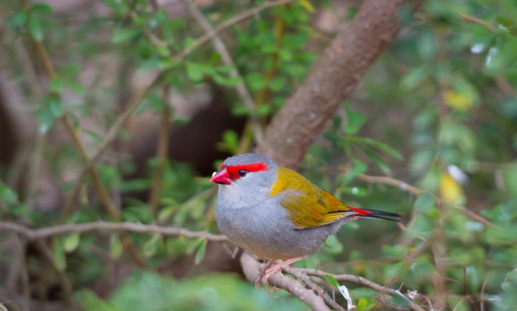 Calling all BIRD lovers! by gigiflower