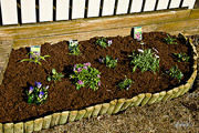 1st May 2015 - Flowerbeds