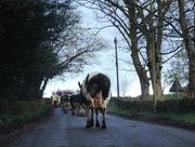 29th Apr 2015 - Rural traffic